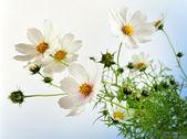 Blommor. — Stockfoto