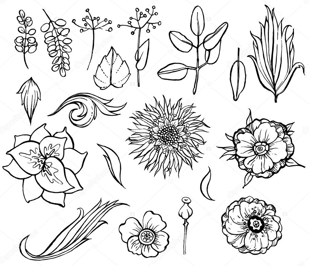 Floral and plant collection  Stock Vector #4246331