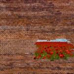 Wall breaking — Stock Photo #4248753