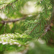 Beautiful branch of fir-tree as abstract christmas background — Stock Photo #4906585