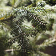 Beautiful branch of  fir-tree as abstract christmas background - Stock Photo