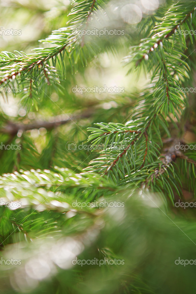 Beautiful branch of  fir-tree as abstract christmas background  Stock Photo #4906585