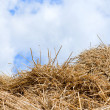 Straw, hay background - Stock Photo
