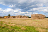 Haystacks bales in countryside — Stock Photo