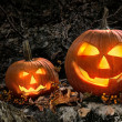 Stok fotoğraf: Halloween pumpkins on rocks at night