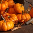 Small pumpkins with wood bucket — Photo