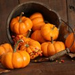Wooden bucket filled with tiny pumpkins - Stock Photo