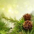 Photo: Pine cones on branches with holiday background