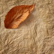 Closeup of old  parchment paper with leaf — Stock Photo