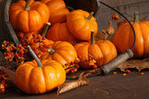 Small pumpkins with wood bucket — Stock Photo