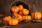 Wooden bucket filled with tiny pumpkins — Stock Photo