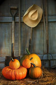 Garden tools in shed with pumpkins — Stock Photo