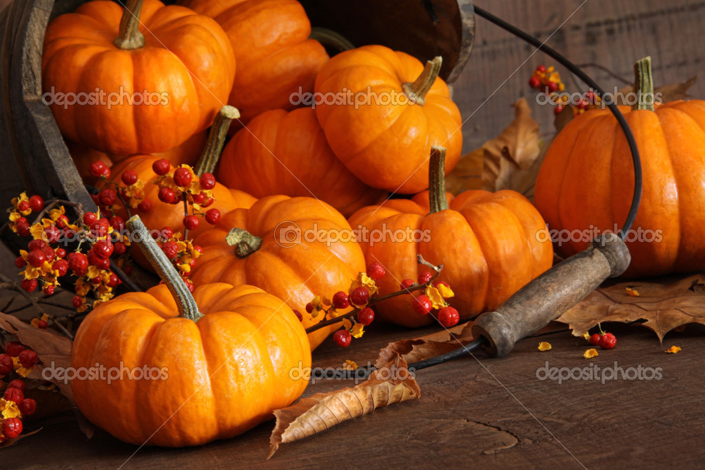 Small pumpkins with bucket against wood — Stock Photo #4175460