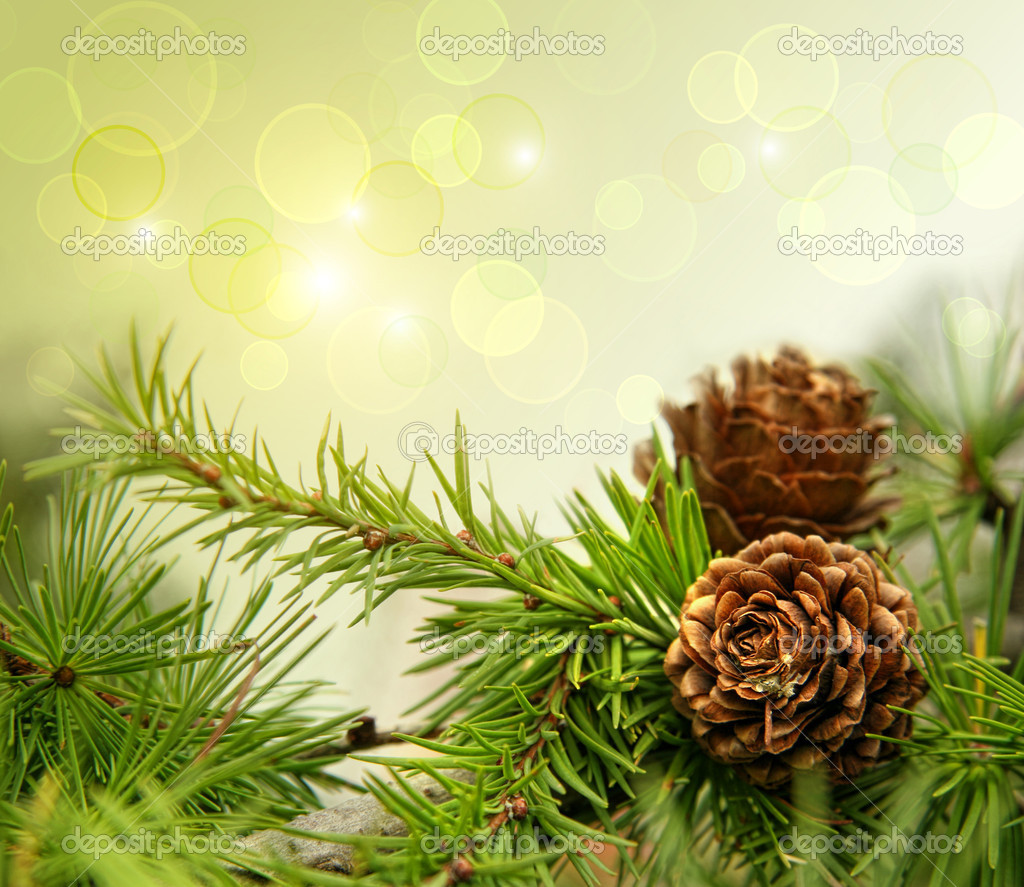 Pine cones on branches with holiday background  Photo #4175464