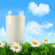 Glass of milk in the grass with daisies — Stock Photo #4819458