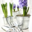 Purple hyacinths on table with sun-filled windows — Stock Photo