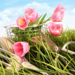 Pink tulips in tall grass -  
