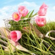 Pink tulips in tall grass - Stok fotoraf