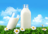 Bottle and glass of milk with grass and daisies — Stock Photo