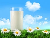Glass of milk in the grass with daisies — Stock Photo