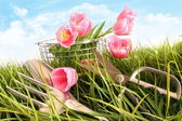 Pink tulips in tall grass — Stok fotoğraf