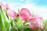 Close-up of Spring tulips — Stok fotoğraf