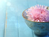 Close up of chrysanthemum flower in bowl — Stock Photo