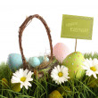Stock Photo: Easter eggs with basket in grass