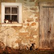 Stock Photo: Rural barn with cats laying in the sun