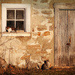 Rural barn with cats laying in the sun - Stock Photo