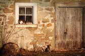 Rural schuur met katten tot vaststelling van in de zon — Stockfoto