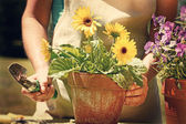 Woman doing garden work with vintage look — Stock Photo
