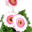 Gerbera in a flower pot. — Stock Photo