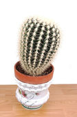 A big cactus in an pot. — Stock Photo