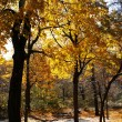 Stock Photo: Autumn in park.