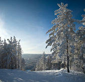 Winter landscape. — Foto Stock