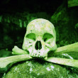 Poisonous Skull — Stock Photo #4009584