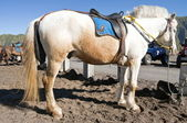 Cavallo bianco e arancia — Foto Stock