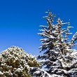 Snowy trees on blue sky — Stock Photo