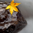 Stock Photo: Maple on stone with river trace color