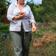 Senior woman harvesting peaches - 