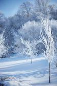 Bosque de invierno — Foto de Stock