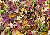 Foglie di autunno — Foto Stock