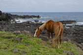 Horses of Easter island — Stock Photo
