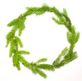 Green spruce frame — Stock Photo