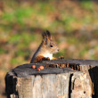 Red squirrel. — Stock Photo #4238458