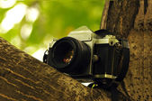 Photohunting — Stockfoto