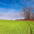 Stock Photo: Field road