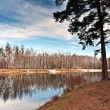 Stock Photo: Birch grove at the lake 2