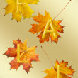 Maple leafs for fall — Stock Photo
